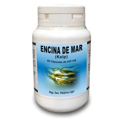 Encina de Mar (Kelp)